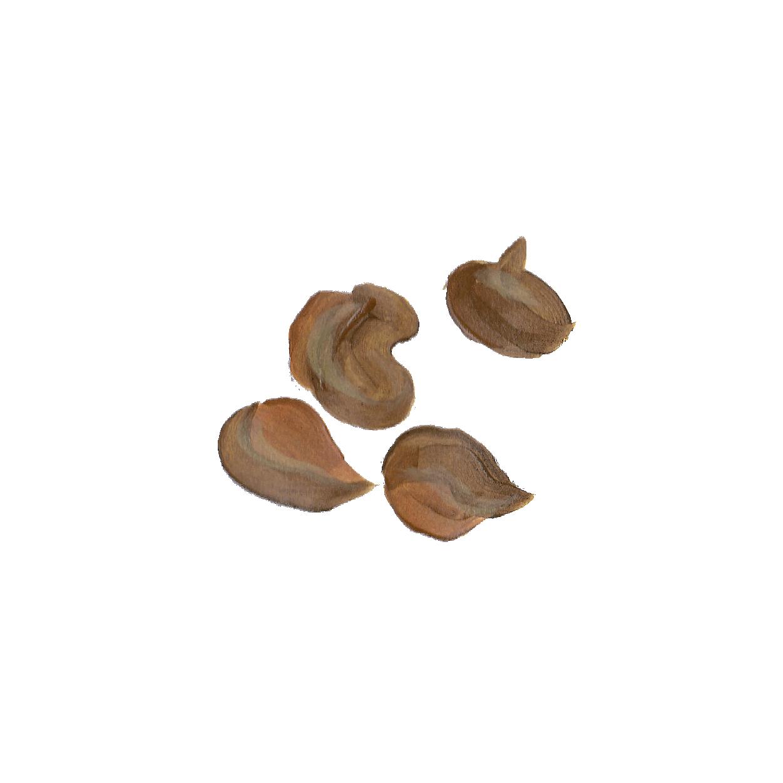 arapuru-botanicos-pintura_Prancheta 1 cópia 5