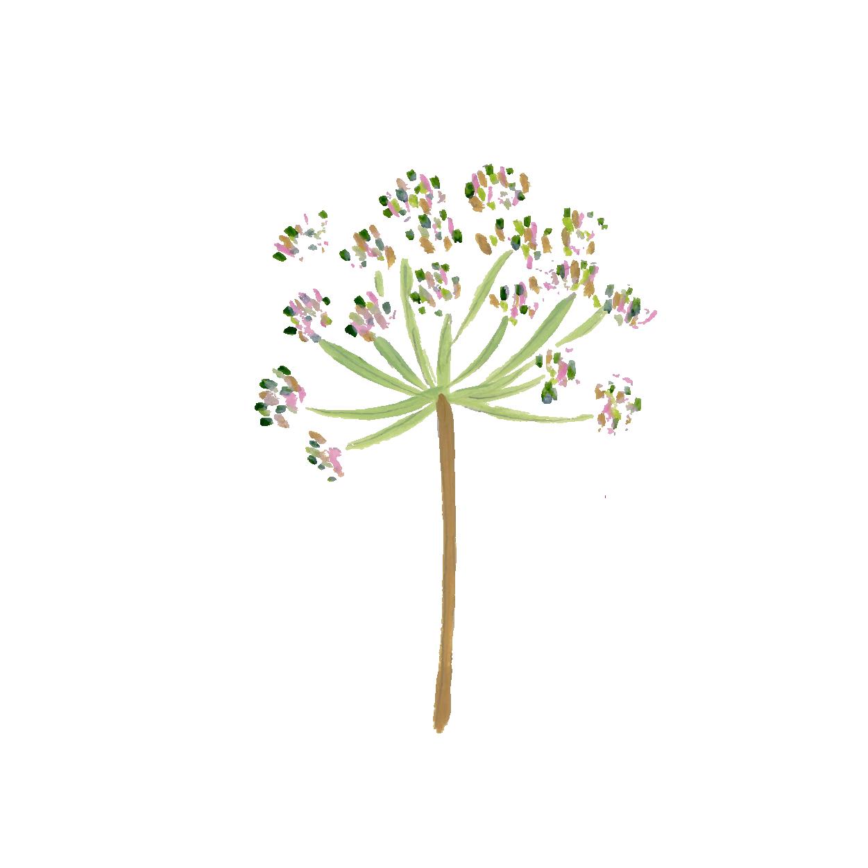arapuru-botanicos-pintura_Prancheta 1 cópia 9