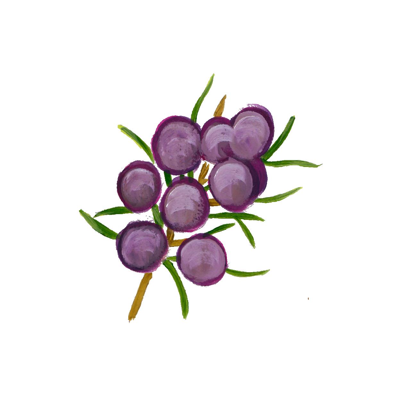arapuru-botanicos-pintura_Prancheta 1